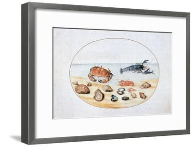 Shells and Shellfish, 16th Century-Joris Hoefnagel-Framed Giclee Print