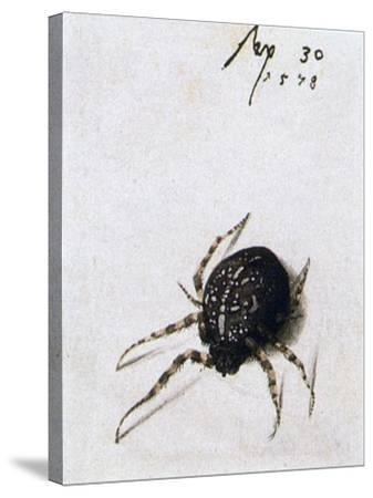 Female Spider, 1578-Joris Hoefnagel-Stretched Canvas Print