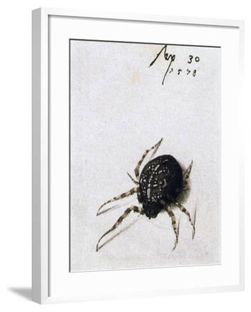 Female Spider, 1578-Joris Hoefnagel-Framed Giclee Print