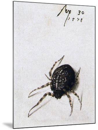 Female Spider, 1578-Joris Hoefnagel-Mounted Giclee Print