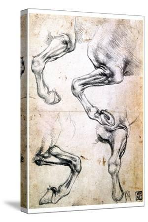 Four Studies of Horses' Legs, C1500-Leonardo da Vinci-Stretched Canvas Print