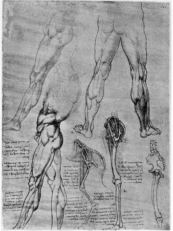 Studies in Comparative Anatomy, 1506-1507-Leonardo da Vinci-Framed Giclee Print