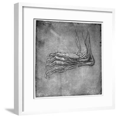 Muscles and Sinews in a Foot, Possibly of a Hare, Late 15th or Early 16th Century-Leonardo da Vinci-Framed Giclee Print
