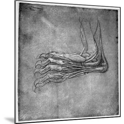 Muscles and Sinews in a Foot, Possibly of a Hare, Late 15th or Early 16th Century-Leonardo da Vinci-Mounted Giclee Print