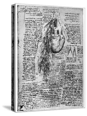 Study of the Heart and the Bronchial Arteries, Late 15th or Early 16th Century-Leonardo da Vinci-Stretched Canvas Print