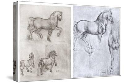 Horses, C1490-1510-Leonardo da Vinci-Stretched Canvas Print