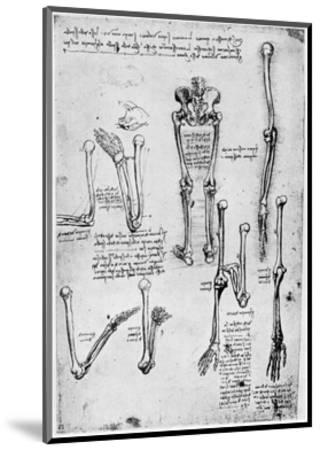 Study of Human Bones, Late 15th or 16th Century-Leonardo da Vinci-Mounted Giclee Print