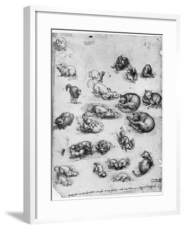 Studies of Cats, 1513-1515-Leonardo da Vinci-Framed Giclee Print