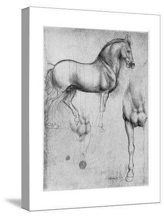 Studies of Horses, C1490-Leonardo da Vinci-Stretched Canvas Print