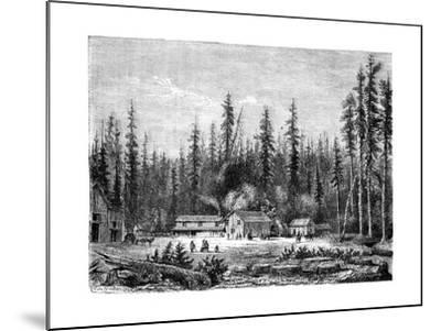 Giant Sequoia Forest, California, 19th Century-Paul Huet-Mounted Giclee Print