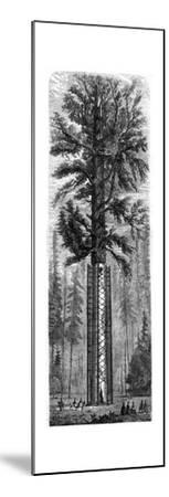 Yosemite National Park, California, 19th Century-Paul Huet-Mounted Giclee Print