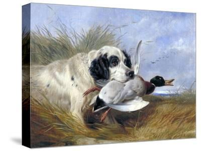 Dog with Wild Duck, 19th Century-Richard Ansdell-Stretched Canvas Print