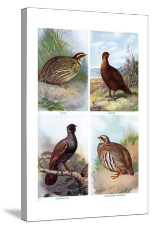Game Birds from Harmsworth Natural History, 1910-Richard Lydekker-Stretched Canvas Print