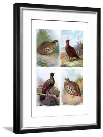 Game Birds from Harmsworth Natural History, 1910-Richard Lydekker-Framed Giclee Print