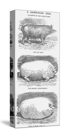 A Darwinian Idea, 1865-TW Woods-Stretched Canvas Print