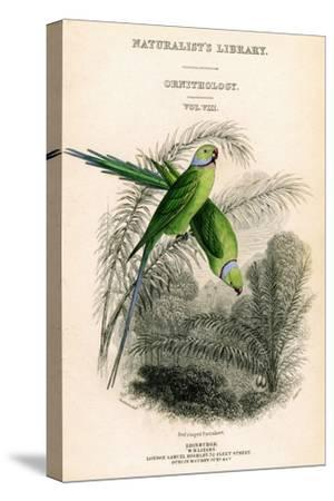 The Naturalist's Library, Ornithology Vol VIII, Red Ringed Parrakeet, C1833-1865-William Home Lizars-Stretched Canvas Print