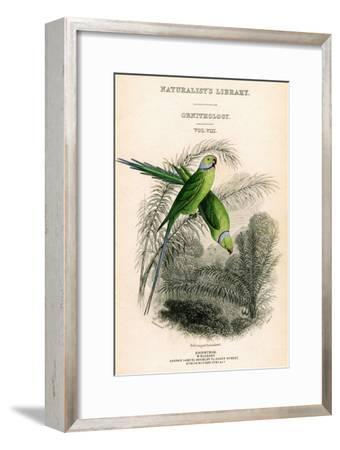 The Naturalist's Library, Ornithology Vol VIII, Red Ringed Parrakeet, C1833-1865-William Home Lizars-Framed Giclee Print