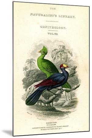 The Naturalist's Library, Ornithology, Senegal Touraco, Violet Plantain Eater, C1833-1865-William Home Lizars-Mounted Giclee Print