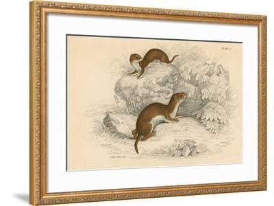 Weasel (Putorius Nivalis/Mustela Vulgari), the Smallest European Carnivore, 1828--Framed Giclee Print