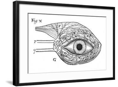Descartes' Idea of the 'Hydraulic' Action of the Nerves, 1692--Framed Giclee Print