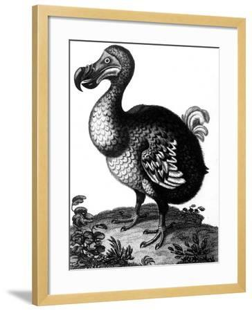Dodo, C1804--Framed Giclee Print
