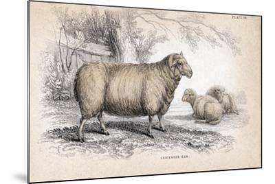 Dishley (New Leiceste) Ram, C1840--Mounted Giclee Print