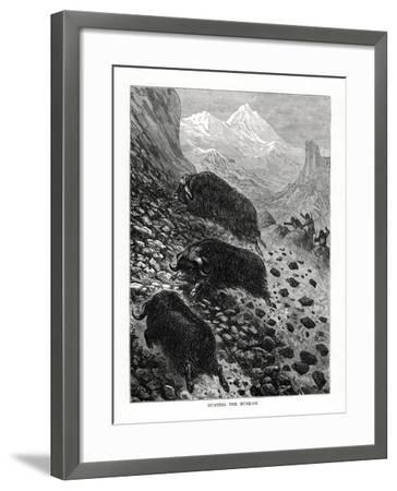 Hunting the Musk-Ox, 1877--Framed Giclee Print