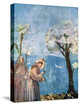 St Francis Preaching to the Birds, 1297-1299, (C1900-192)-Giotto-Stretched Canvas Print