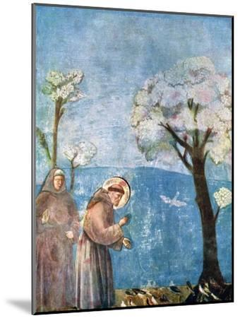 St Francis Preaching to the Birds, 1297-1299, (C1900-192)-Giotto-Mounted Giclee Print