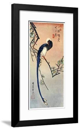 Long Tailed Blue Bird on Branch of Plum Tree in Blossom, 19th Century-Ando Hiroshige-Framed Giclee Print