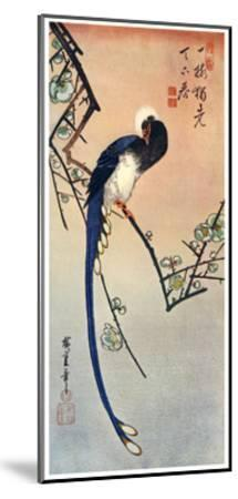 Long Tailed Blue Bird on Branch of Plum Tree in Blossom, 19th Century-Ando Hiroshige-Mounted Giclee Print