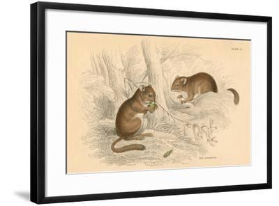 Common Dormouse (Muscardinus Arvellanariu), Hibernating Rodent, 1828--Framed Giclee Print