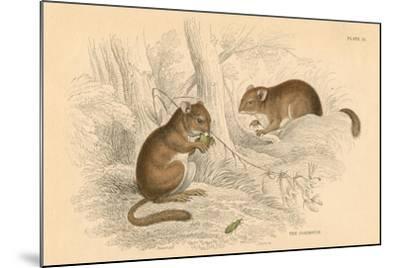 Common Dormouse (Muscardinus Arvellanariu), Hibernating Rodent, 1828--Mounted Giclee Print