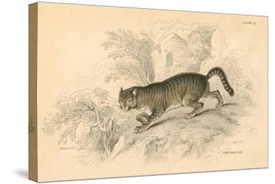 European Wild Cat (Felis Silvestri), 1828--Stretched Canvas Print