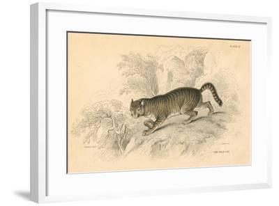 European Wild Cat (Felis Silvestri), 1828--Framed Giclee Print
