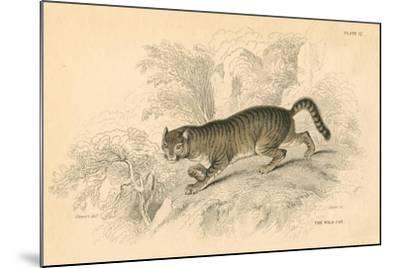European Wild Cat (Felis Silvestri), 1828--Mounted Giclee Print