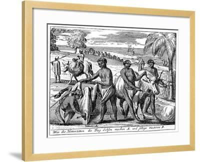 Khoikhois Breaking-In Oxen, South Africa, 18th Century--Framed Giclee Print