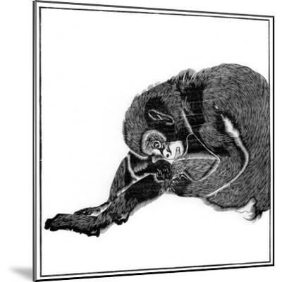 Monkey, 1766--Mounted Giclee Print