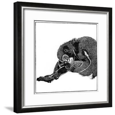 Monkey, 1766--Framed Giclee Print