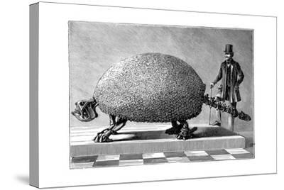 Fossil of a Giant Armadillo from South America, C1890--Stretched Canvas Print
