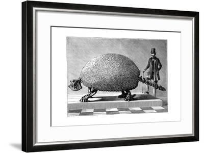 Fossil of a Giant Armadillo from South America, C1890--Framed Giclee Print