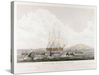South Sea Whale Fishery, 1825-John Huggins-Stretched Canvas Print