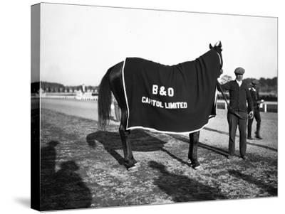 B&O Capitol Limited Horse--Stretched Canvas Print