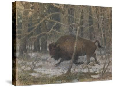The Wood Bison-Evgeny Alexandrovich Tichmenev-Stretched Canvas Print