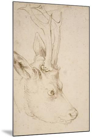 Head of a Roebuck, 1503-Albrecht D?rer-Mounted Giclee Print