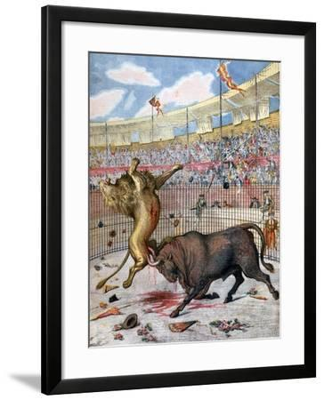 Combat Between a Lion and a Bull, Spain, 1894--Framed Giclee Print