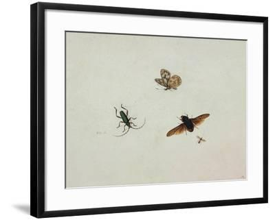 Four Insects, End of 17th C-Johannes Bronkhorst-Framed Giclee Print