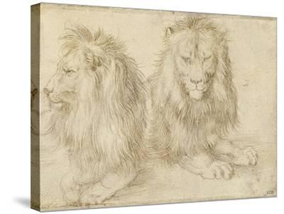 Two Seated Lions, 1521-Albrecht D?rer-Stretched Canvas Print