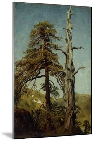 Study of Trees-August Cappelen-Mounted Giclee Print