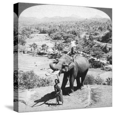 An Elephant and its Keeper, Sri Lanka, 1902-Underwood & Underwood-Stretched Canvas Print